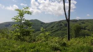 nádherné lesy