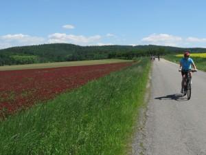 místní pole jsou žlutá a bordó - řepka a jetel